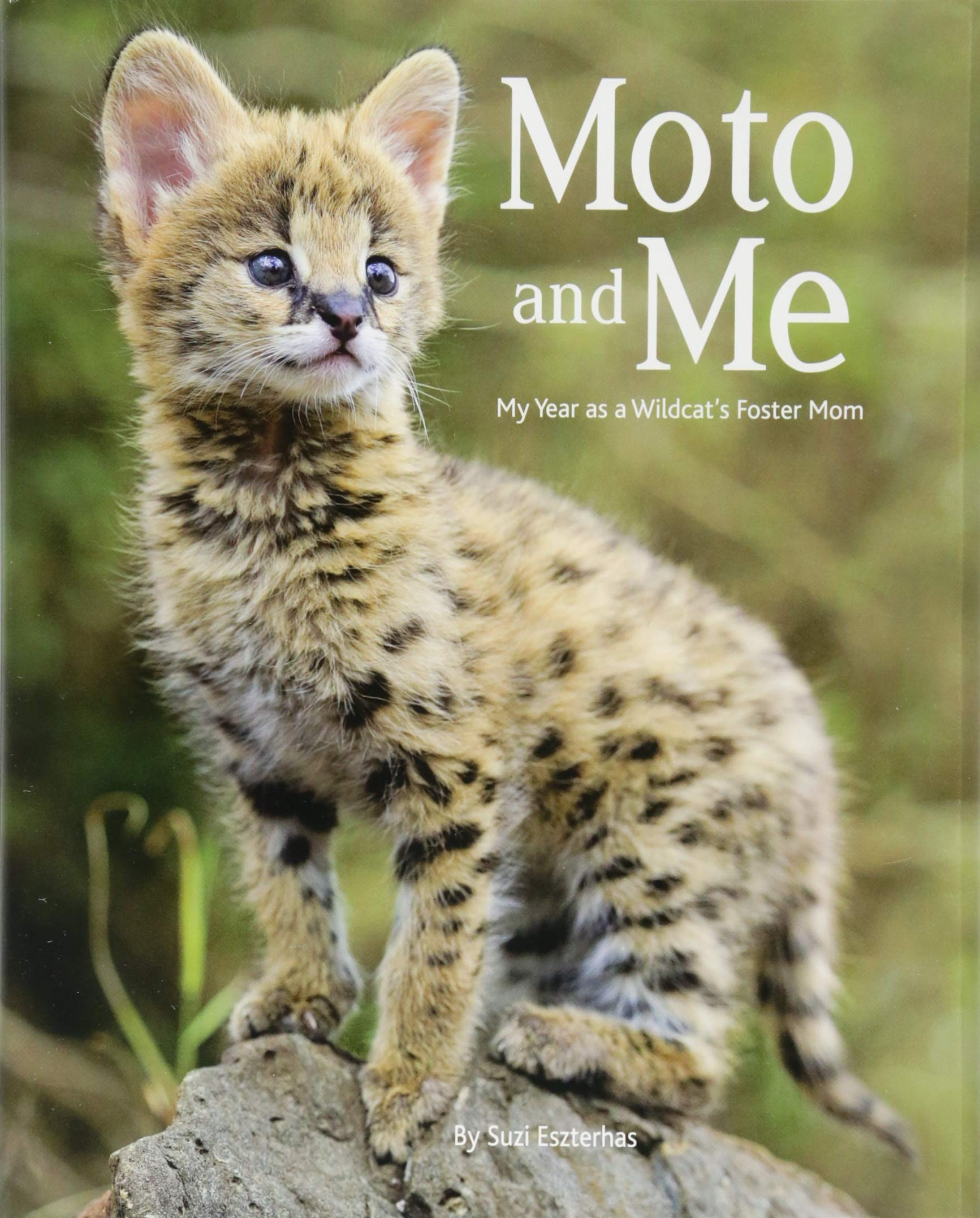 Moto and Me: My Year as a Wildcat's Foster Mom