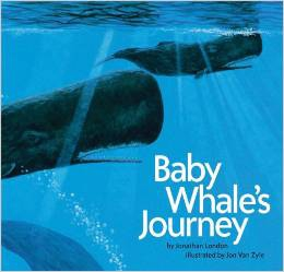 Baby Whale's Journey